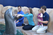 dolphin interaction